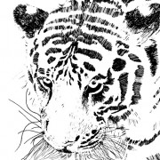 Link toSet of tiger vector picture art 16