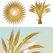 Link toGold color wheat vecotr set 04