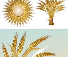 gold color wheat vecotr set 04