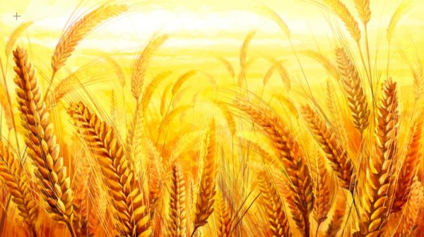gold color wheat PSD set 05