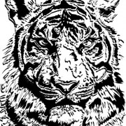 Link toSet of tiger vector picture art 02