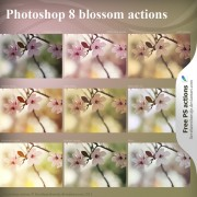 Link toBlossom photoshop actions