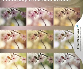 Blossom photoshop actions