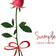 Link toSet of pretty rose elements vector 02