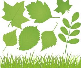 Different leaves design elements vector 01