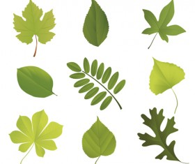 Different leaves design elements vector 02
