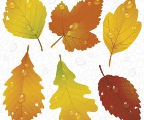 Different leaves design elements vector 03