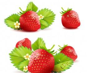 Fresh strawberry elements background vector 05