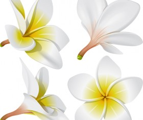 Vivid Open flowers vector 01