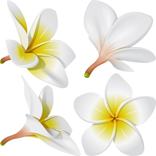 Vivid Open flowers vector 01
