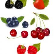 Link toVivid fresh vegetables and fruits vector 05