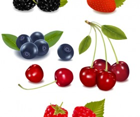 Vivid Fresh vegetables and fruits vector 05