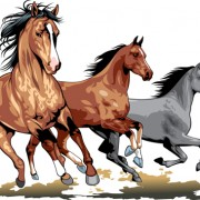 Link toDifferent running horses vector 05