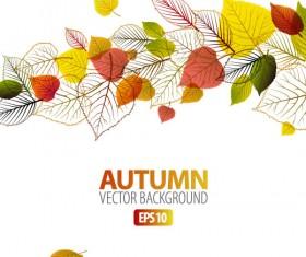 autumn leaves elements background vector set 04