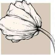 Link toVivid hand drawn tulip background vector 05
