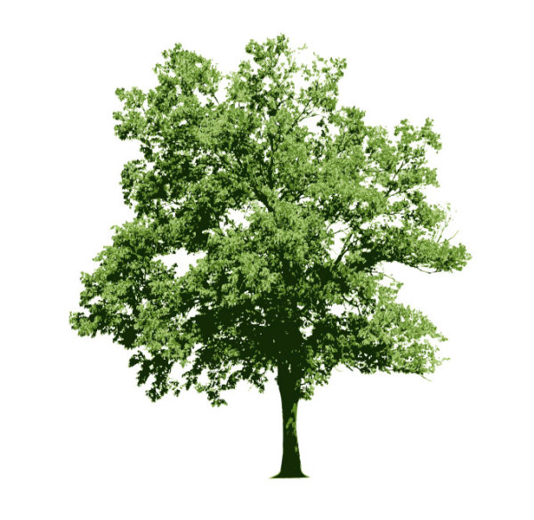 Different tree design elements vector 02 - Vector Plant free download