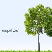 Link toDifferent tree design elements vector 04