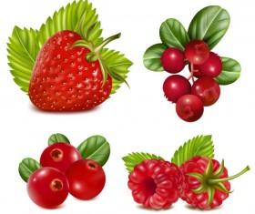 Various tasty Fruit elements vector 03