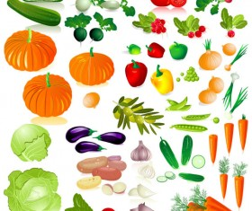 Different Fresh vegetables vector graphics 02