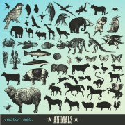 Link toVarious animals silhouettes design vector set 03