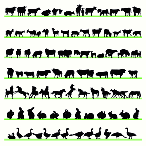 Various Animals Photos Various Animals Silhouettes