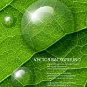 Link toShiny green leaves background design vector 04
