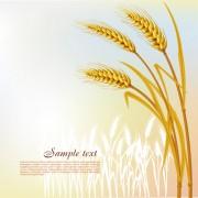 Link toGolden wheat vector background set 01