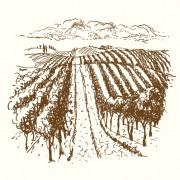 Link toHand drawn retro vineyard elements vector 05