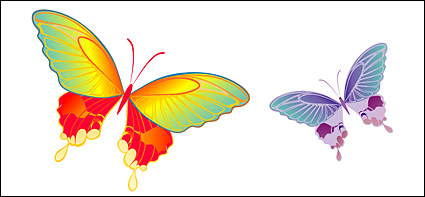 Colorful Butterfly elements vector