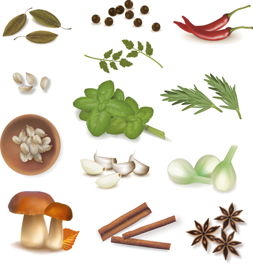 Set of Different Spice...
