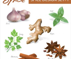Set of Different Spice design vector 02