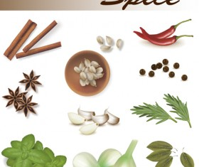 Set of Different Spice design vector 05