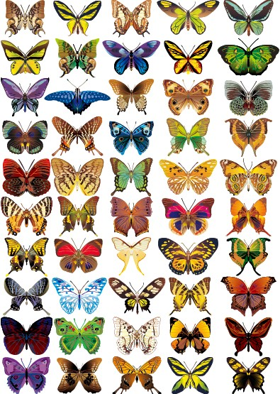 50 kind colorful Butterfly vector graphic