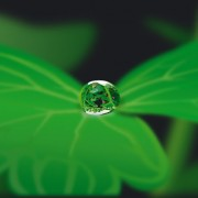 Link toPlant with water drops design vector 02