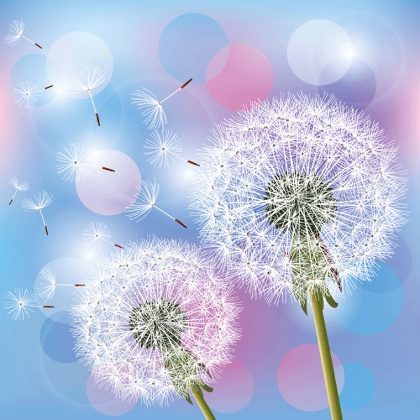 Dandelion design elements vector