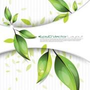 Link toSet of bio life vector backgrounds 02