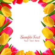Link toSet of color tulips cards design vector 03