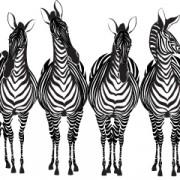 Link toHand drawn zebra and giraffe design vector 03