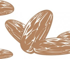 Hand drawn Almonds vector material