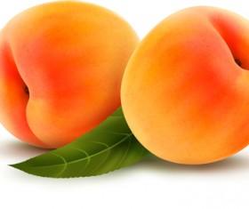 Fresh Fruits design vector set 01