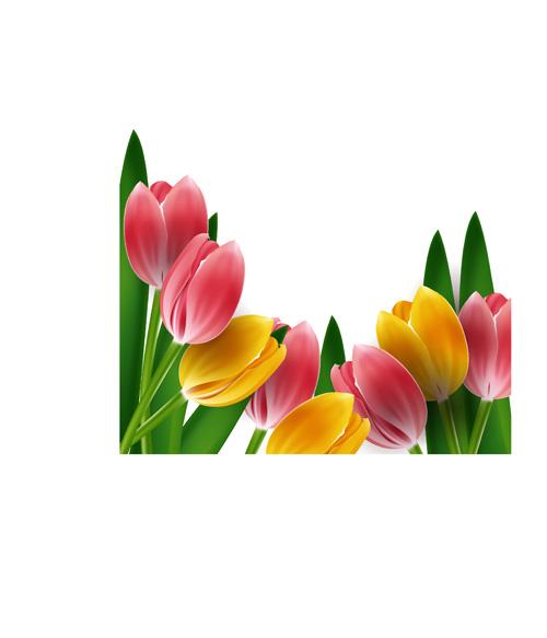 Tulips frames vector 01 - Vector Flower, Vector Frames ... Tulips Border Clipart