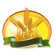 Link toSet of wheat vector lables 03