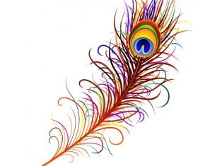 Feather design elements vector Illustration 01