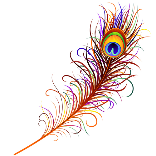 Feather design elements vector Illustration 01 - Vector Other free ...
