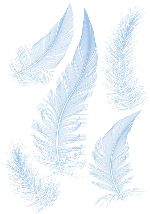 Feather design elements vector Illustration 04