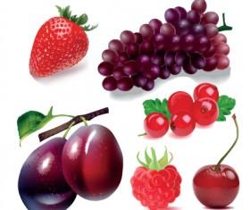 Various Fresh fruit design elements vector 01