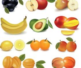 Various Fresh fruit design elements vector 03