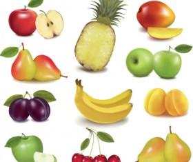 Various Fresh fruit design elements vector 04