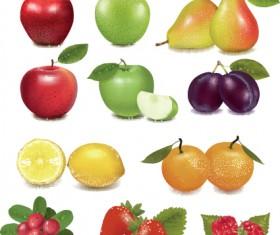 Various Fresh fruit design elements vector 05