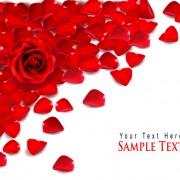 Link toValentine love backgrounds vector set 09